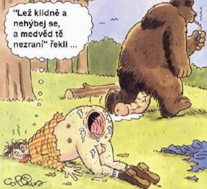 Medvěd s pérem