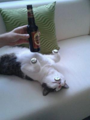 Kočka a pivo