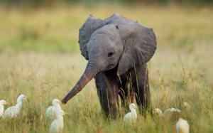 Slon má kamarády