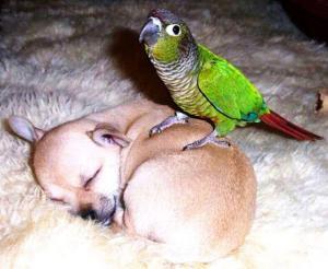 Štěně vs. papoušek