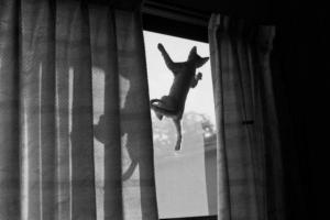 Kočka na skle