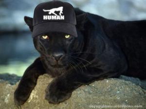 Puma s kšiltovkou Human