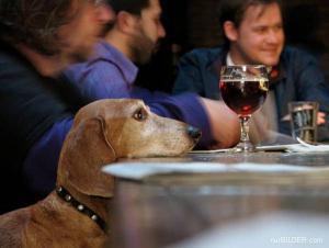 Pes vs. víno