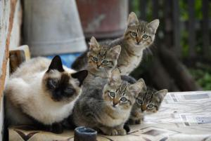 Kočičí výhled