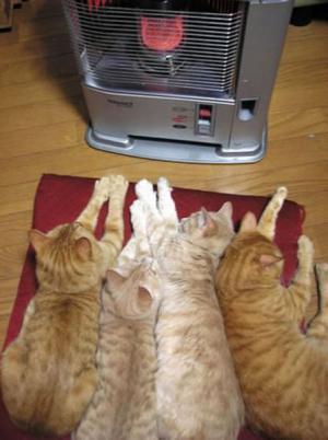 Topení pro kočky