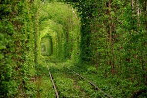 Tunel ze stromů