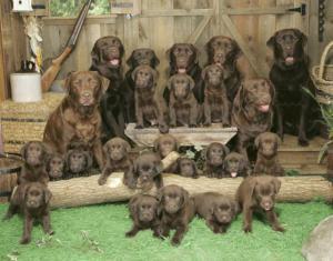 Rodinné psí foto
