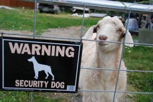 Pozor, zlé zvíře...