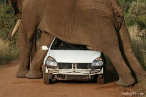 Problémy se slonem