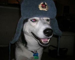 Pes voják