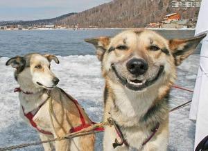 Zhulený pes