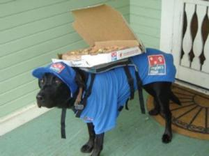 Pizzu doručuje pes