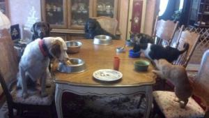 Zvířecí večeře