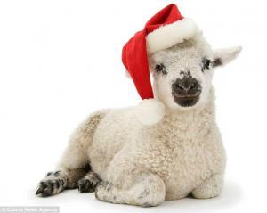 Máš má ovečko dávno spát..