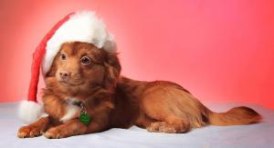 Santa není doma