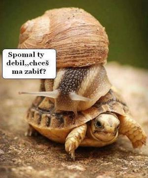Rychlost želvy