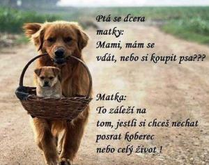 Pes vs muž