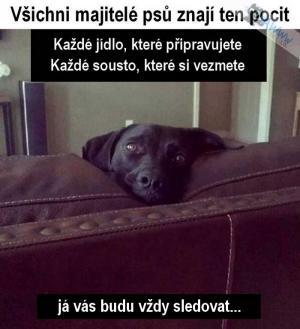 Všichni majitelé psů znají ten pocit