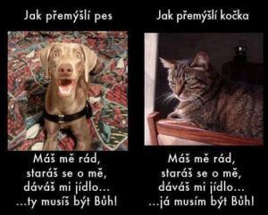 Pravda o zvířátkách