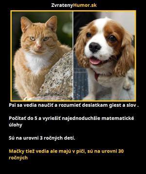 Kočky vs psi