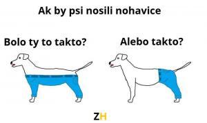Psí nohavice