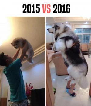 2015 vs 2016