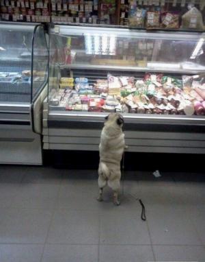 Sen každého psa