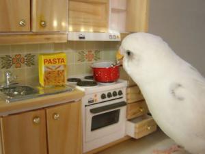 Papoušek vaří
