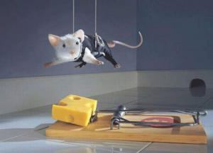 Myší agent