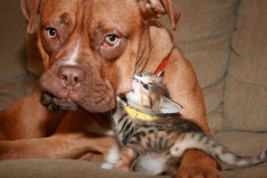 Kočka ničí psa
