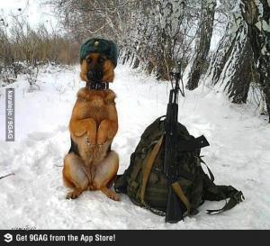 Psí voják