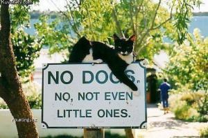 Psům vstup zakázán