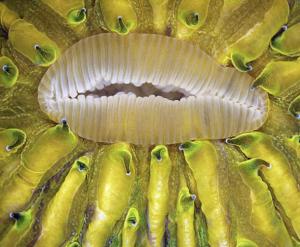 Korál - James Nicholson [Pod mikroskopem]