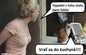 Hádka koček