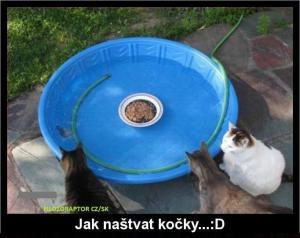 Jak naštvat kočky