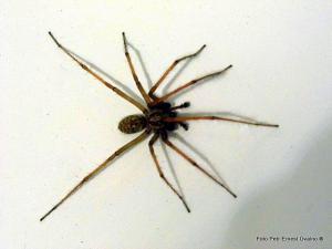 Pavouk ve vaně