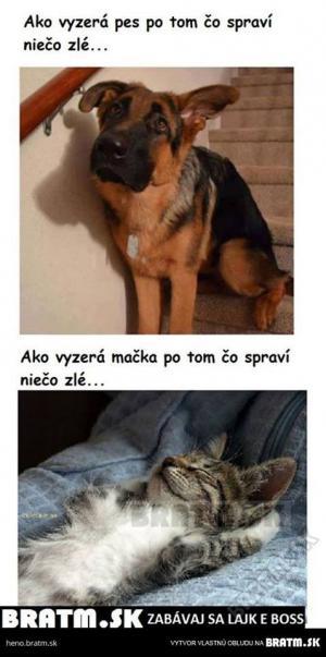 Pes vs kočka