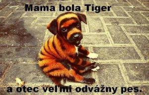 Mama bola tiger