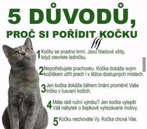 Proč si pořídit kočku