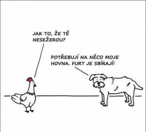 O čem si vypráví pes a kuře?