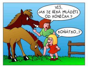 Víš, jak se říká mláděti od koníčka?