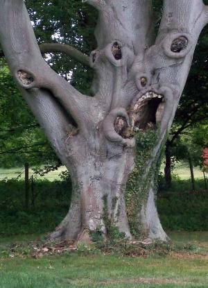 Nejstrašidelnější strom