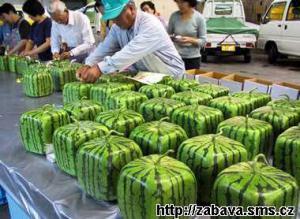Nové tvary melounů