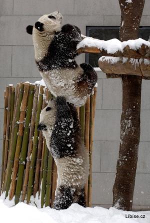 Pandy - já Ti pomůžu!
