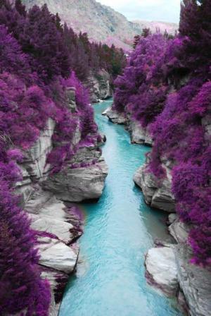 Řeka vs. fialový porost