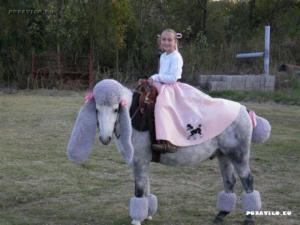 Vymóděný kůň