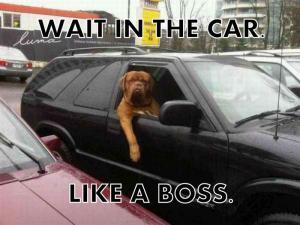 Počkej v autě!