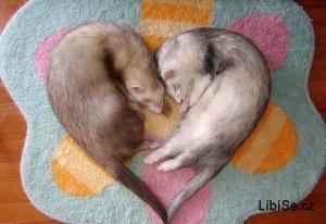 Zvířátka - srdce