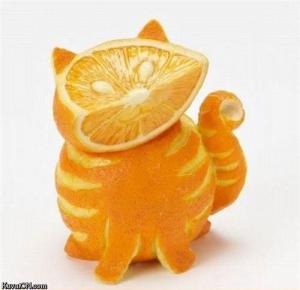 Pomerančová kočka