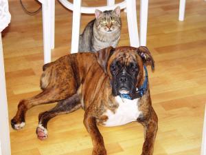 Jako pes a kočka. :)))